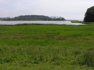 Der Ausblick zum Ormø mit der Kormoranen und wo der Seadler ist.