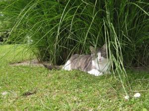 Katten hygger sig i haven.