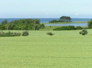 Der Ausblick aus den Feldweg – zum Vald und Strand.
